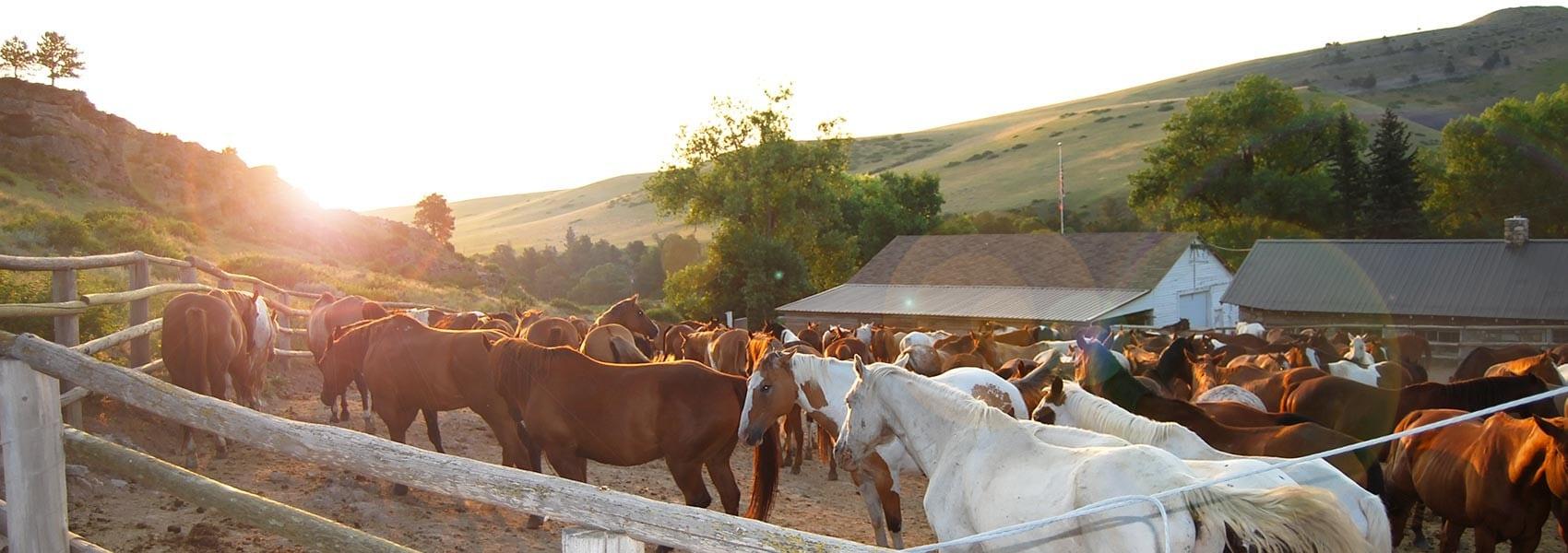 horses at Eatons' Ranch