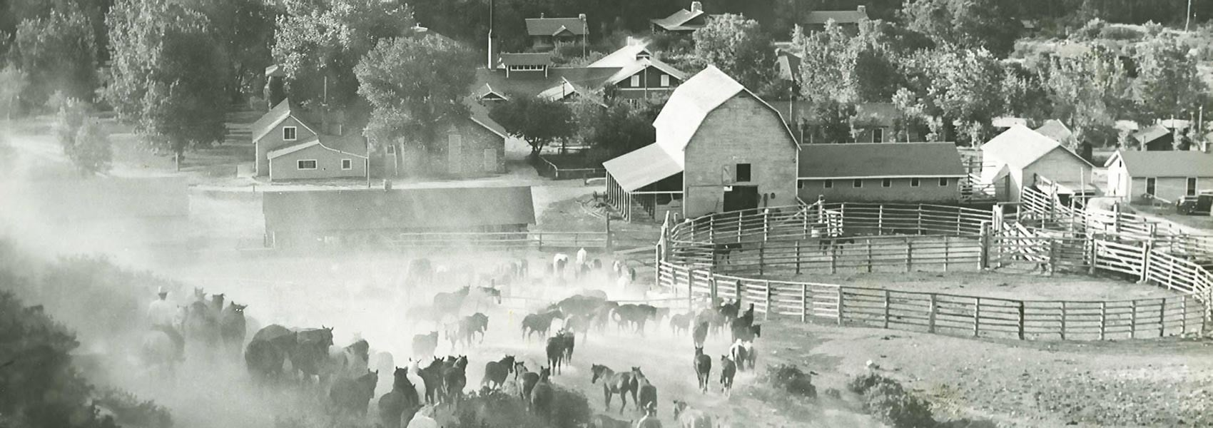 Eatons Ranch black and white photo