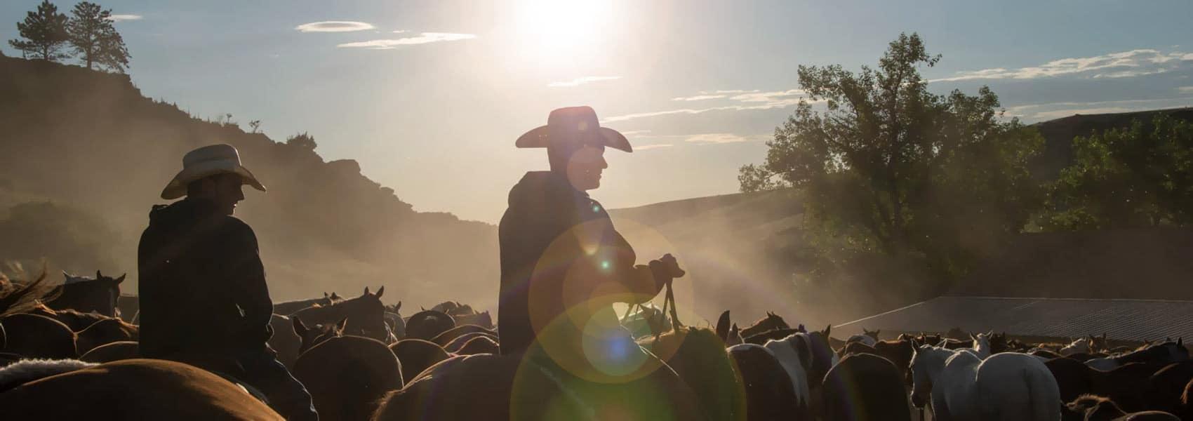 Wranglers hearding horses